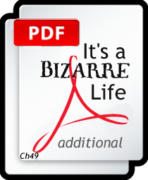 IT'S A BIZARRE LIFE - additional PDF